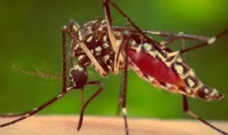 zika virüsü enfeksiyonu
